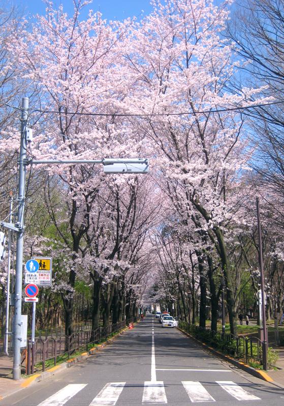 春来たる。
